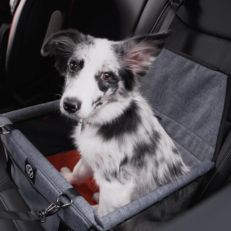 Cesto Pet de Transporte